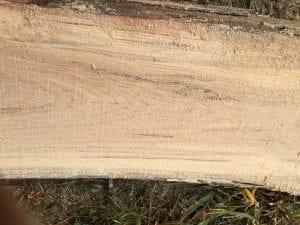 White Oak Milled Log